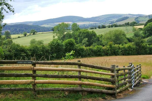 Fence Landscape
